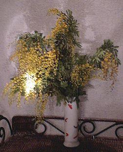 mimoza0120