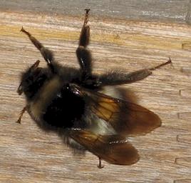 Bee0524