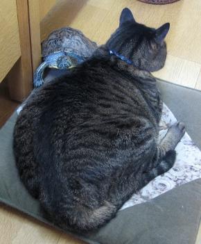 Cat0107