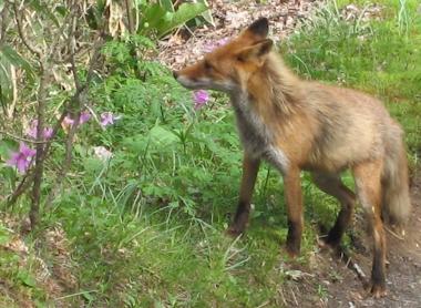 Fox0512